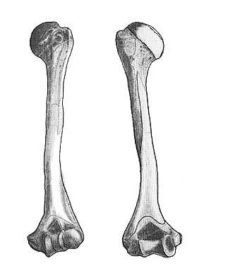Conbriza: nuevo medicamento para el tratamiento de la osteoporosis