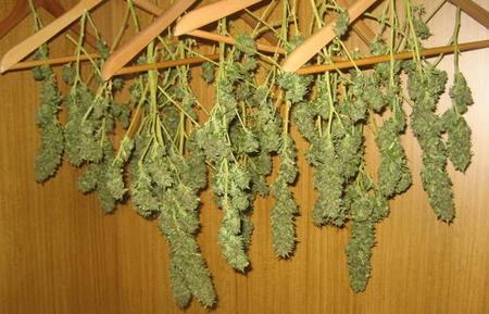 Secado de plantas medicinales