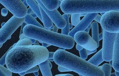 Cómo se clasifican las bacterias