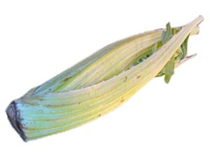 El cardo, una verdura típica navideña