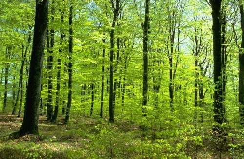 2011, Año Internacional de los Bosques, por una cosmética respetuosa con el planeta