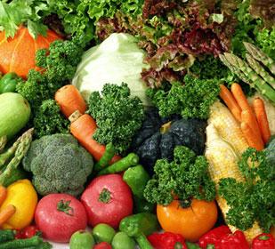 Dieta trofológica