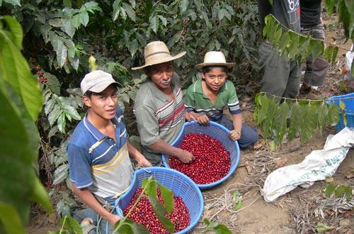 Fair-trade-2