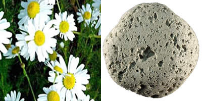 manzanilla y piedra pomez