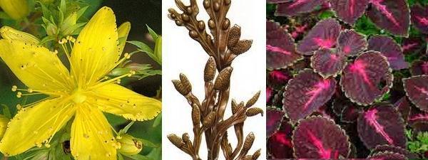 ¿Qué hierbas medicinales son buenas para el hipotiroidismo?
