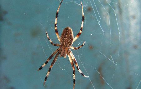 Cómo curar una picadura de araña