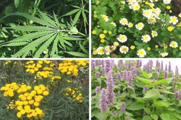 Lista de plantas medicinales