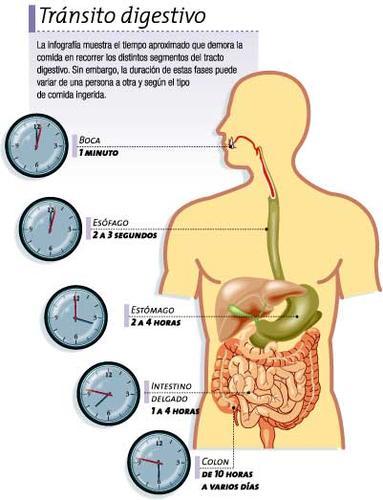 El aparato digestivo: funcionamiento - Buena Salud