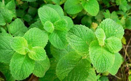 Plantas para curar