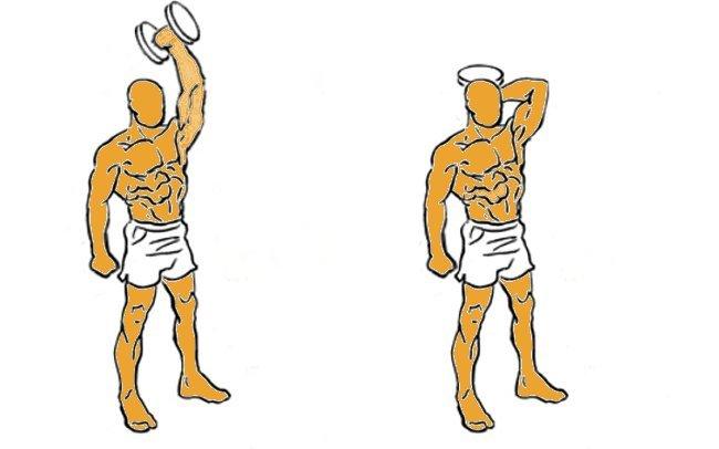 Entrenar triceps con extension vertical de brazos con mancuernas