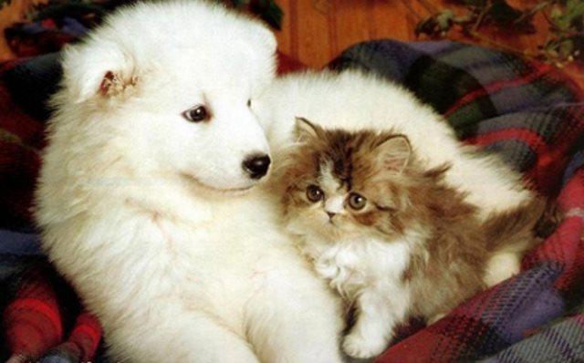 aromaterapia-para-mascotas