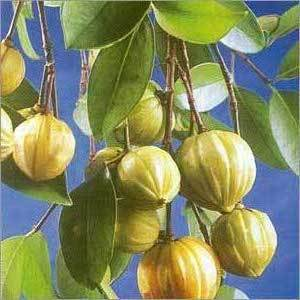 ... qué otros nombres se conoce la Garcinia cambogia? | buenasalud.net