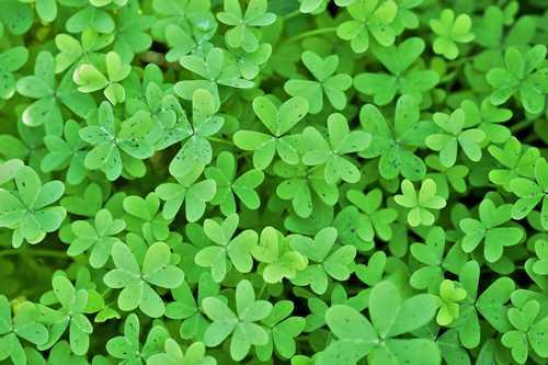Usos medicinales de la alfalfa