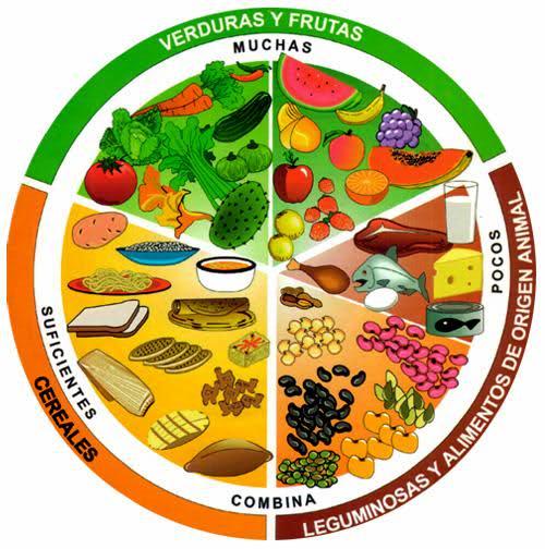 Tipos de alimentos animal vegetal y mineral