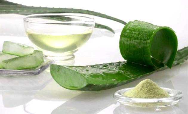 Como tomar el jugo de aloe vera buena salud - Como cuidar la planta de aloe vera ...
