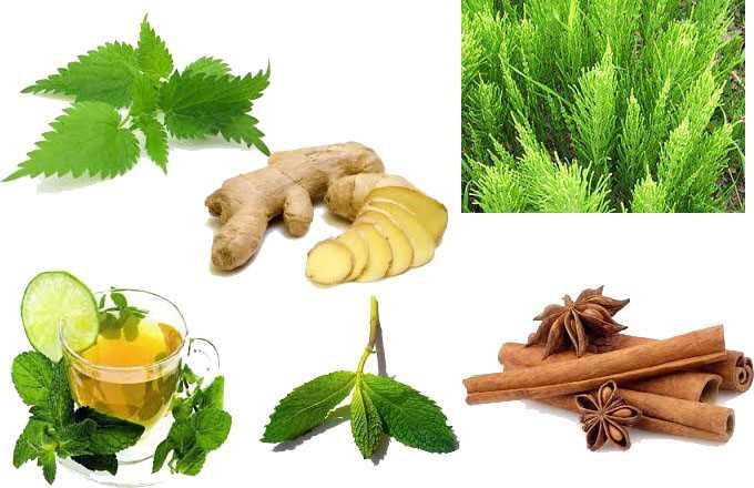 Las mejores hierbas para adelgazar - Buena Salud