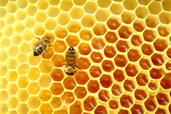 Miel de abeja para las alergias