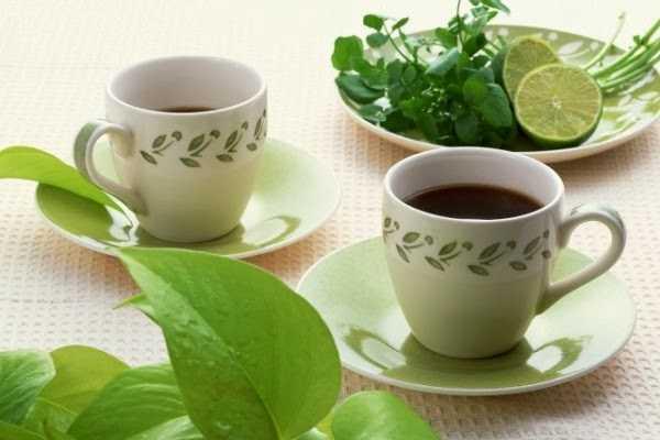 dieta del te verde para adelgazar