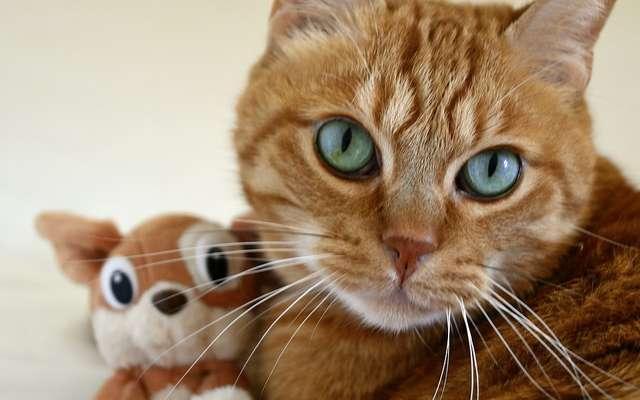 consejos-para-hacer-feliz-a-tu-gato