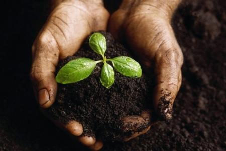 Beneficios de la jardinería en la salud 00.jpg