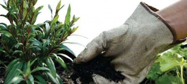 Beneficios de la jardinería en la salud 2.jpg
