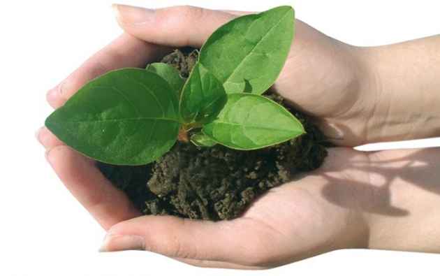 Como-preparar-fertilizantes-organicos-1.jpg