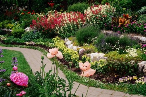 Plantas rústicas de jardín con propiedades medicinales_0.jpg