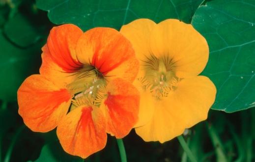 Plantas rústicas de jardín con propiedades medicinales_2.jpg