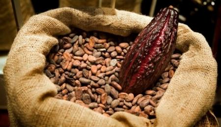 Propiedades y beneficios del cacao 0.jpg
