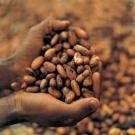 Propiedades y beneficios del cacao 2.jpg