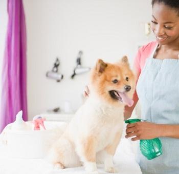 Remedios caseros y naturales para mascotas_0_0.jpg