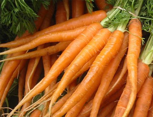 Zanahorias Beneficios de la zanahoria