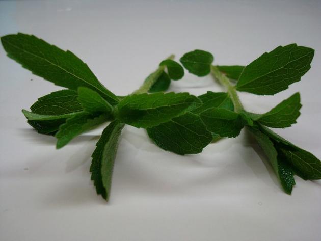 caá-je-é (stevia), el regalo de Onagait.jpg