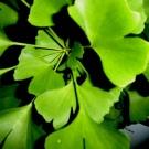 plantas medicinales para el asma4.jpg
