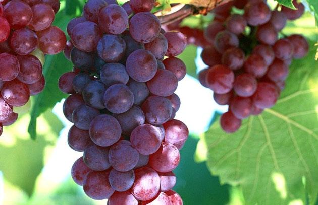 propiedades del aceite de uva2.jpg